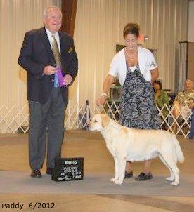 Brighton Labs | Paddy Show Dog Winner Orlando, Fla.
